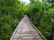 След променада через сочный лес, парк штата Baxter стоковые изображения