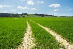 След трактора пересекая зеленое поле молодой плантации около маяка Ivinghoe Стоковые Фото