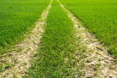 След трактора пересекая зеленое поле молодой плантации Стоковые Изображения