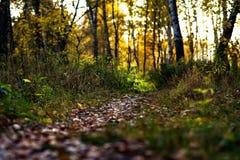 След через деревья в лесе осени стоковая фотография rf