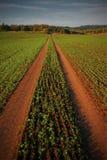 След через поле Стоковые Фото
