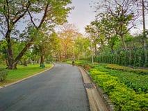 След черного asfalt конкретный jogging в общественном парке, человеке идя на дорожку формы кривой под вечнозелеными деревьями лис стоковые изображения rf