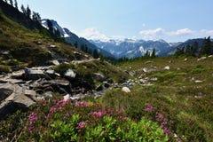 След Энн озера, Mt Национальный лес хлебопека-Snoqualmie стоковые изображения rf