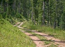 след 2 узкой дороги грязи Стоковые Фотографии RF