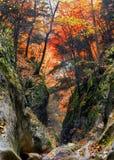 след gorge каньона грандиозный Стоковая Фотография