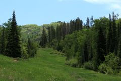 След Thunderhead, Steamboat Springs, Колорадо стоковые изображения rf