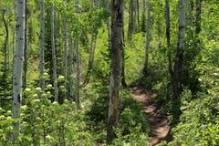 След Thunderhead, Steamboat Springs, Колорадо Стоковая Фотография RF