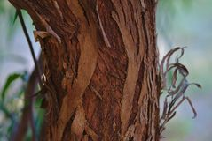 Слезать кору дерева во время сезона осени стоковое изображение rf