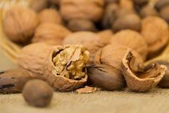 Слезли деталь грецкого ореха с несосредоточенной предпосылкой стоковое изображение