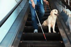 Слепой человек с длинными тросточкой и собака-поводырем на эскалаторе стоковые фотографии rf