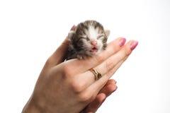 слепые котята руки Стоковые Фото