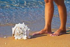 следующий seashell к Стоковое Изображение
