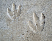 следы ноги динозавра Стоковые Фото