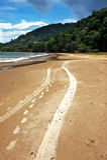 Следы пляжа Стоковое Изображение