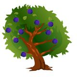 Слива с плодоовощами и листьями зеленого цвета иллюстрация вектора