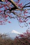 слива цветений III Стоковое Изображение RF
