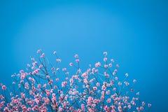 Слива цветения весны цветка розовая стоковое фото rf