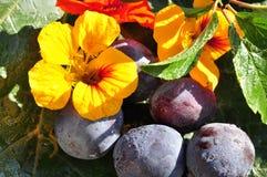 сливы кресса цветения стоковое изображение rf