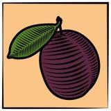 Слив-гравировк-цвет Стоковые Фото