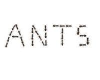 слова муравея Стоковые Фото