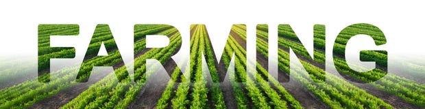 Слово обрабатывая землю на предпосылке поля плантации моркови Агробизнес и агро-индустрия Еда фермы растя для перепродажи стоковые изображения