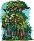 Слои дождевого леса иллюстрация штока