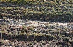 слои пустыни Стоковая Фотография