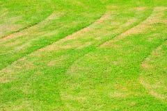 Слой зеленой травы Стоковая Фотография