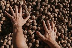 Слой касания рук грецких орехов стоковая фотография rf