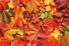 Слой ярких листьев осени Стоковые Фото