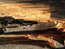 Сломленная деревянная загородка которая обеспечивает взгляд стоковые изображения rf