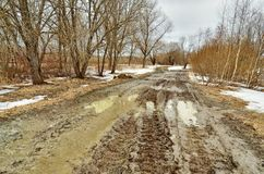 Сломленная дорога в древесинах Дорога идет переход, шевеля грязь стоковая фотография