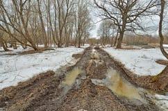 Сломленная дорога в древесинах Дорога идет переход, шевеля грязь стоковое фото