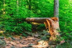 Сломленное падение дерева на след Стоковые Фото