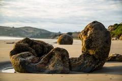 Сломленное Moeraki Больдэр под солнцем раннего утра Стоковые Фотографии RF