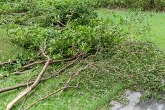 Сломленные деревья после сильного шторма стоковая фотография