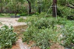 Сломленные деревья после сильного шторма стоковое изображение