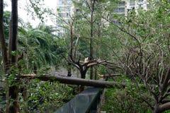 Сломленные деревья после сильного шторма стоковое изображение rf