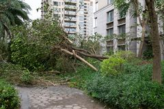Сломленные деревья после сильного шторма стоковое фото