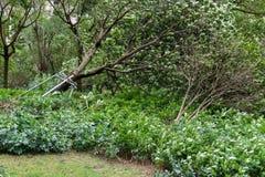 Сломленные деревья после сильного шторма стоковые изображения rf