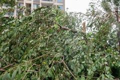 Сломленные деревья после сильного шторма стоковые фотографии rf