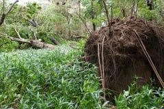 Сломленные деревья после сильного шторма стоковые фото