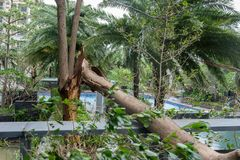 Сломленные деревья после сильного шторма стоковая фотография rf