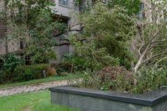 Сломленные деревья после сильного шторма стоковые изображения