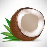 сломленные листья кокоса Стоковая Фотография RF