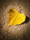 Сломленные лист Стоковые Изображения