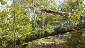 Сломленный лес после мощного урагана видеоматериал