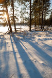 Сломленный ограждать на краю древесины зимы. стоковое фото