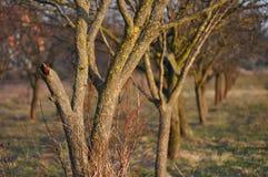 сломленный ствол дерева Стоковая Фотография