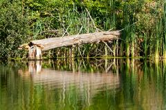 сломленный ствол дерева Стоковые Изображения